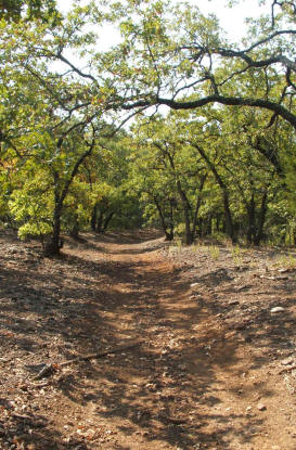 The upland forest growth is dominated by Post Oak and Blackjack Oak, interspersed with grasslands on sandy soils.